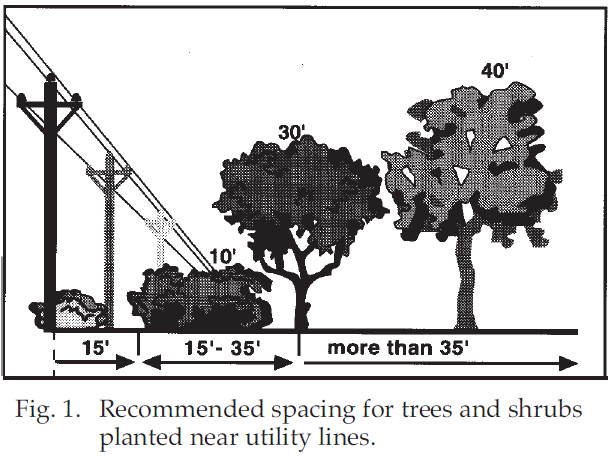tree spacing illustration