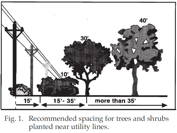 tree spacing illustration